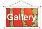 D & B Buttons - Gallery
