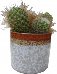 Cacti West German Plant Pot Roth Fat Lava
