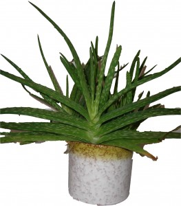 Roth Fat Lava Plant Pot with Cactus